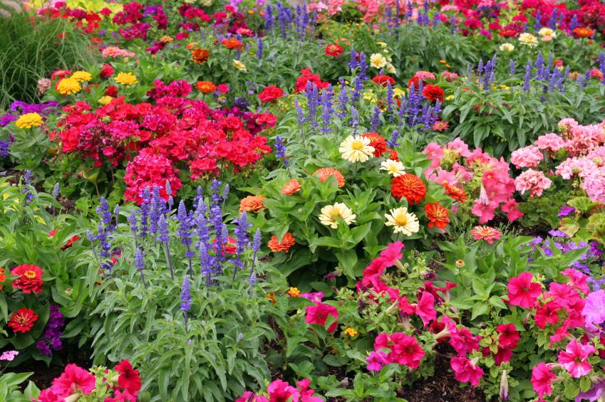 flower-garden-design-ideas-WYwx - Design On Vine