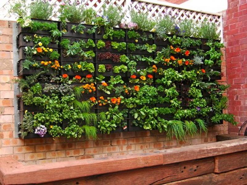 home-vegetable-garden-design-utNk - Design On Vine