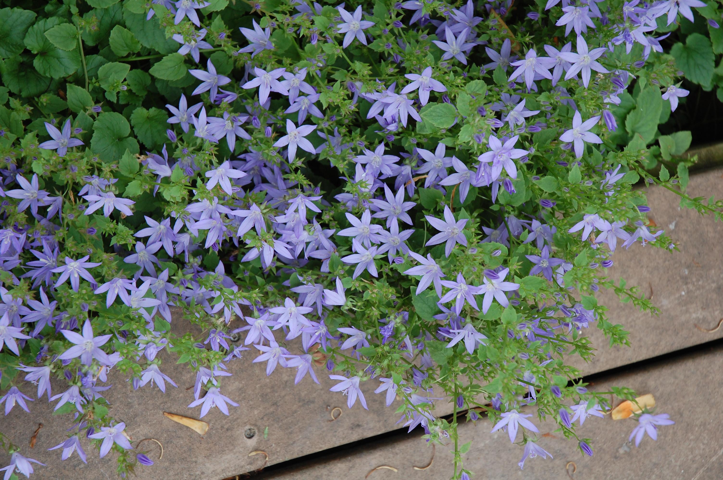 Perennial flower garden design design on vine for Landscape design perennial garden