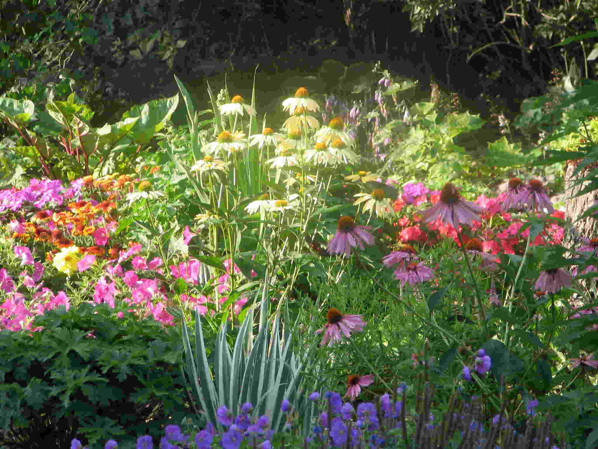 Perennial Garden Design Ideas Pfez Design On Vine