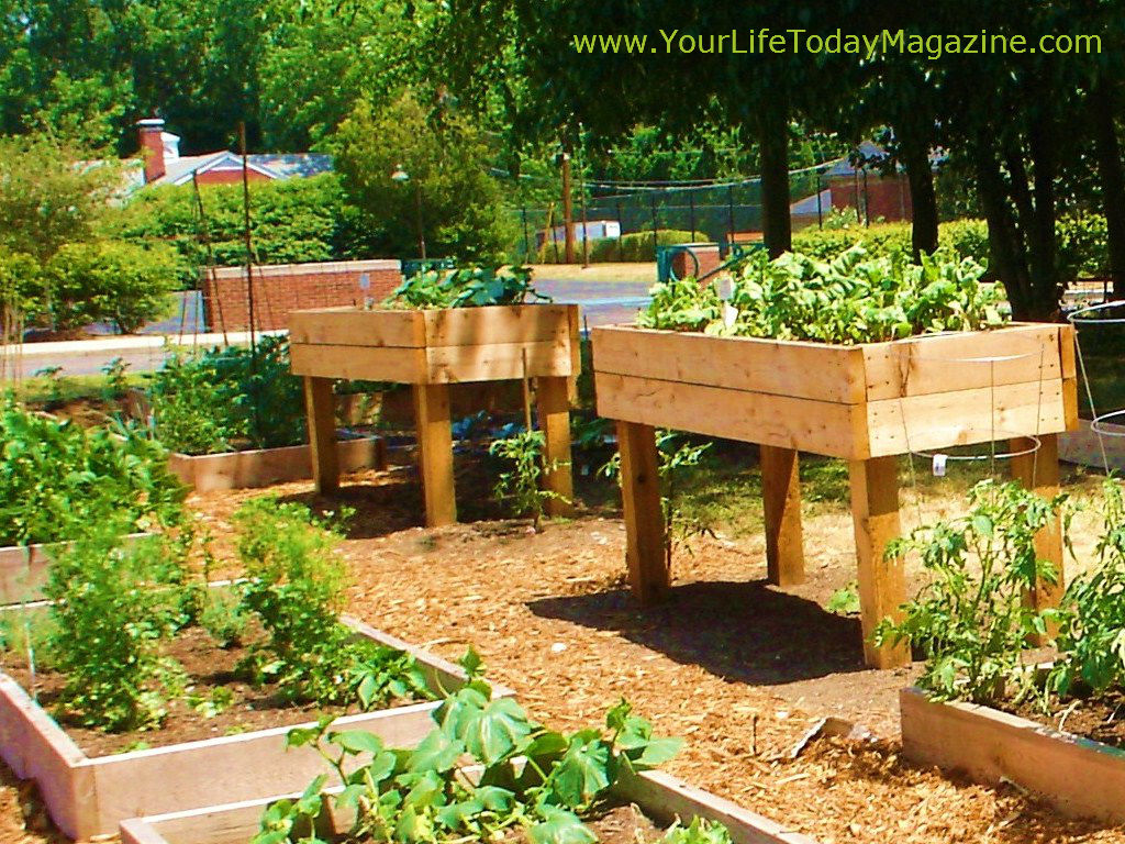 Raised Garden Design KpTb