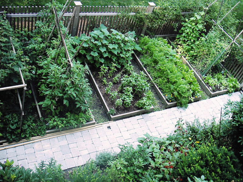 vegetable-garden-design-ideas-MtNd - Design On Vine